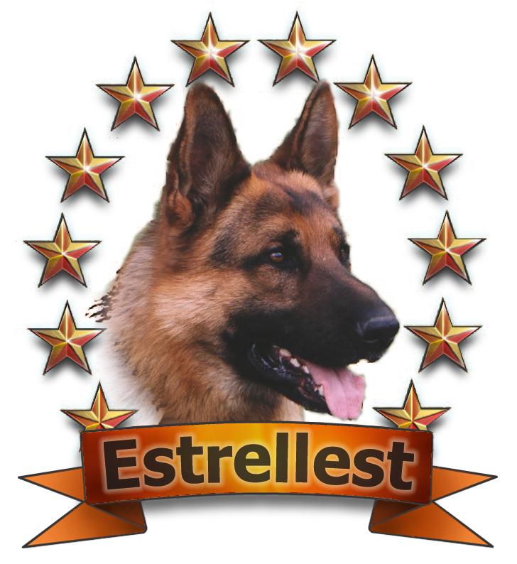 EST PJK CH Estrellest Black (Greve Felix x Ungwari Star Flamme) s.1998, om. Marika Mikk