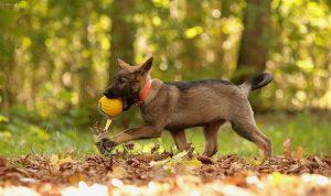 väike Estrellest Queenwolf Kutchi Mutchi 10