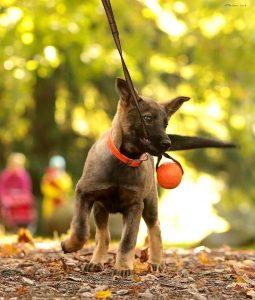 väike Estrellest Queenwolf Kutchi Mutchi 2