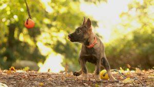 väike Estrellest Queenwolf Kutchi Mutchi 6